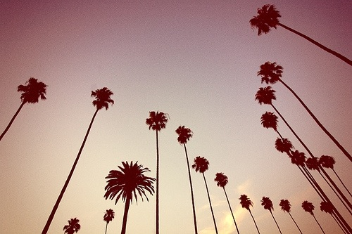 Palm Trees, We Heart It