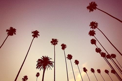 Palm Trees, We Heart It